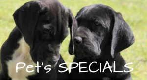 Pet food specials